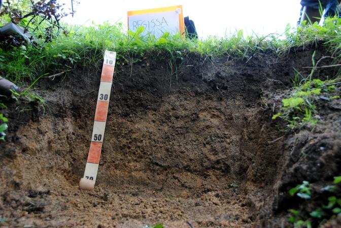 Soil of the month September: Phaeozems by Stefaan Dondeyne
